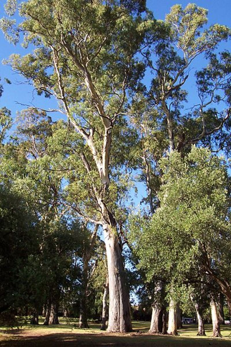 Gum tree  - Why I hate the term natural childbirth